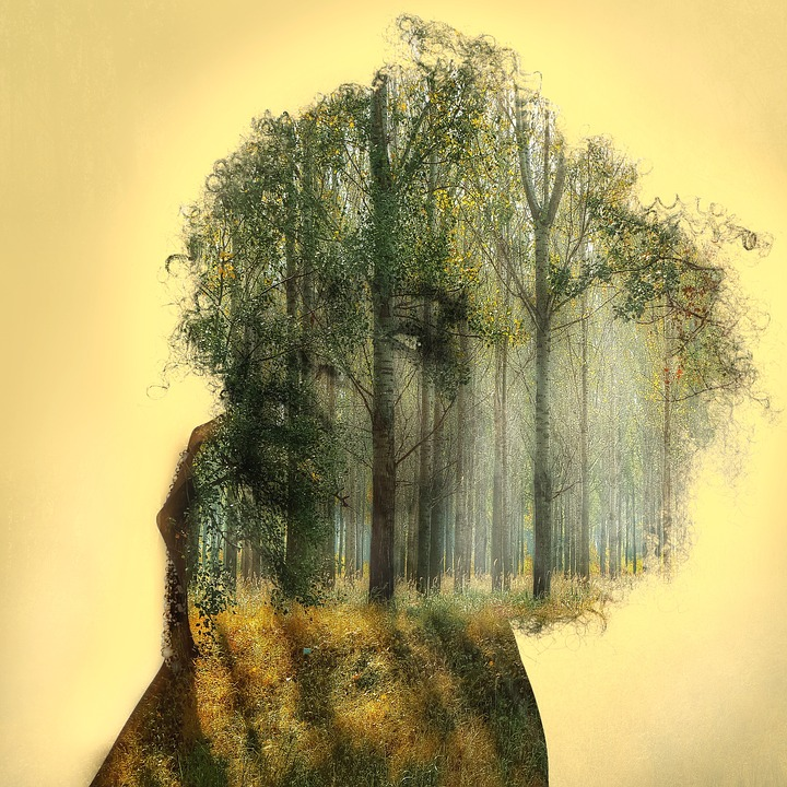 Free Illustration Double Exposure Forest Woman Free