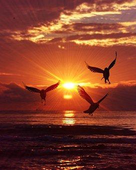 Sunrise, Birds, Sea, Sunset, Nature, Sun