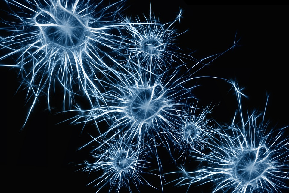 Neurons, Brain Cells