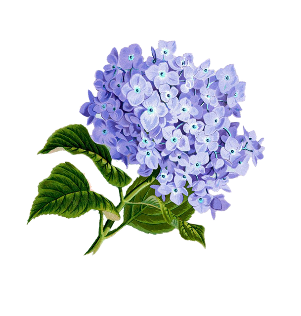 Free illustration  Flower, Purple, Plan   Free Image on Pixabay   1775377