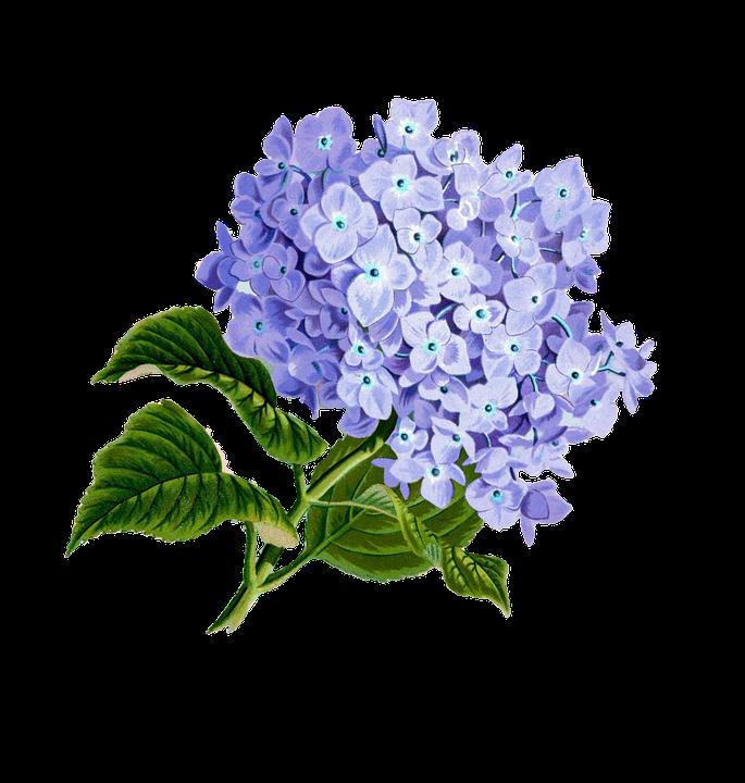Flower Purple Plan Pretty Vintage Composition