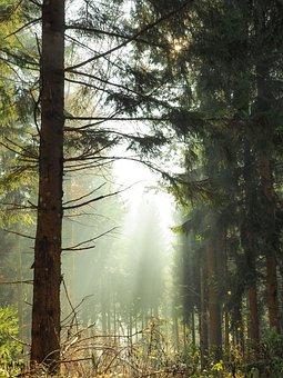 Clairière, Bois, Sous-Bois, Nature
