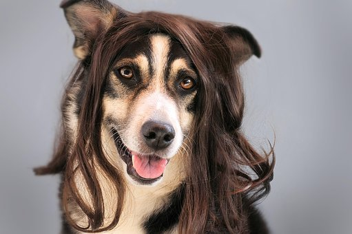 Dog Hair Wig Hairstylist Animal Pet Joke D
