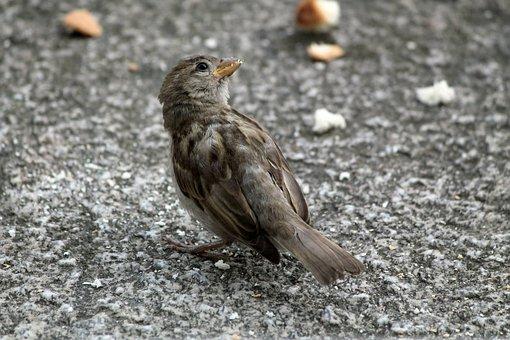 sať veľké vtáky Čierna Lesbické torrent