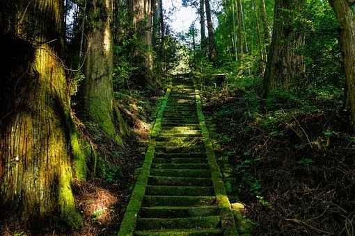 日本, 阿蘇, 神社, 階段, 苔, 緑, 神社, 神社, 神社, 神社, 神社