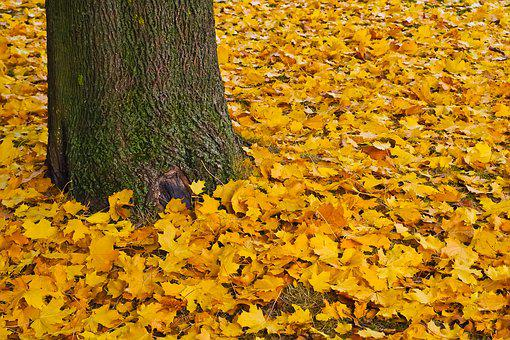Fall, Gold, Golden Autumn, Leaves