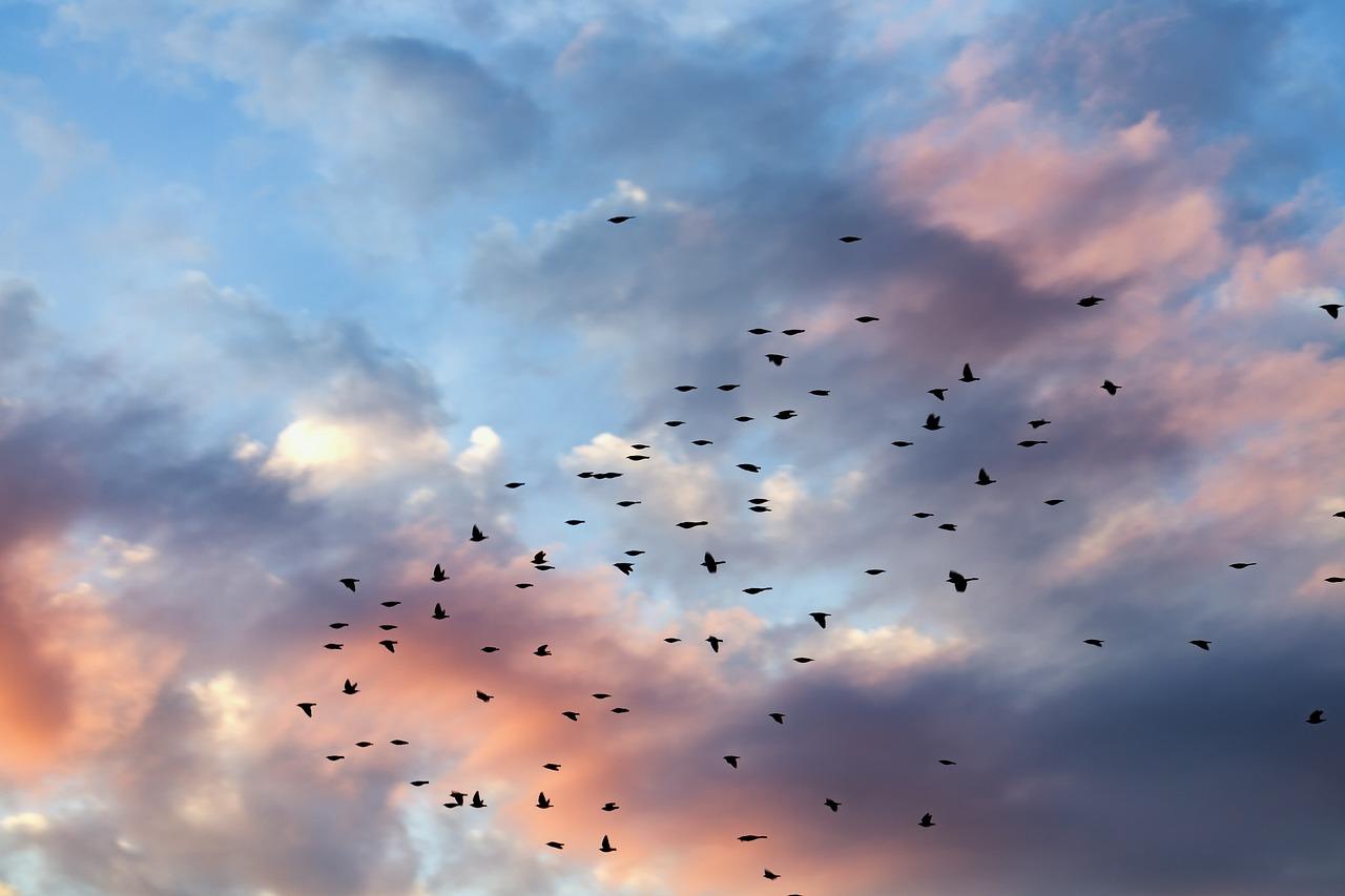 Стихи поздравления работников птицефабрики