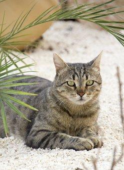 Cat, Pet, Animal, Cute, Domestic, White