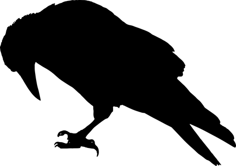 Tier, Vogel, Schwarz, Krähe, Rabe