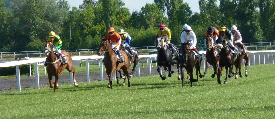 Hippodrome Horse Race Racing Pmu Jockeys Horses