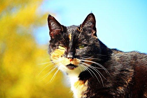 Hladké čierne mačička pics iPhone zadarmo Análny porno