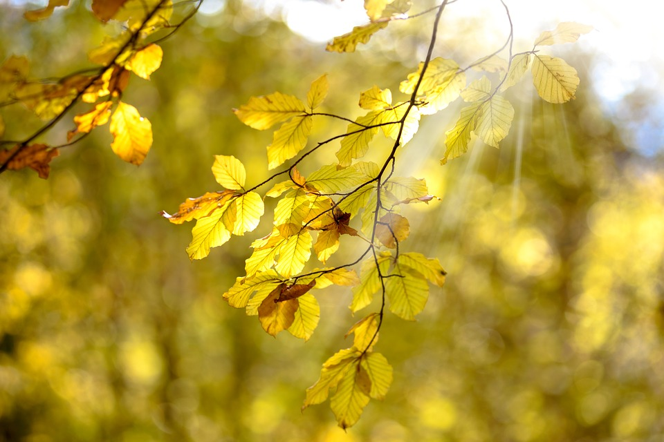 The Sun, Autumn, Yellow, Nature, Clear, The Background