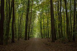 Autumn, Forest, Forest Path, Beech Wood