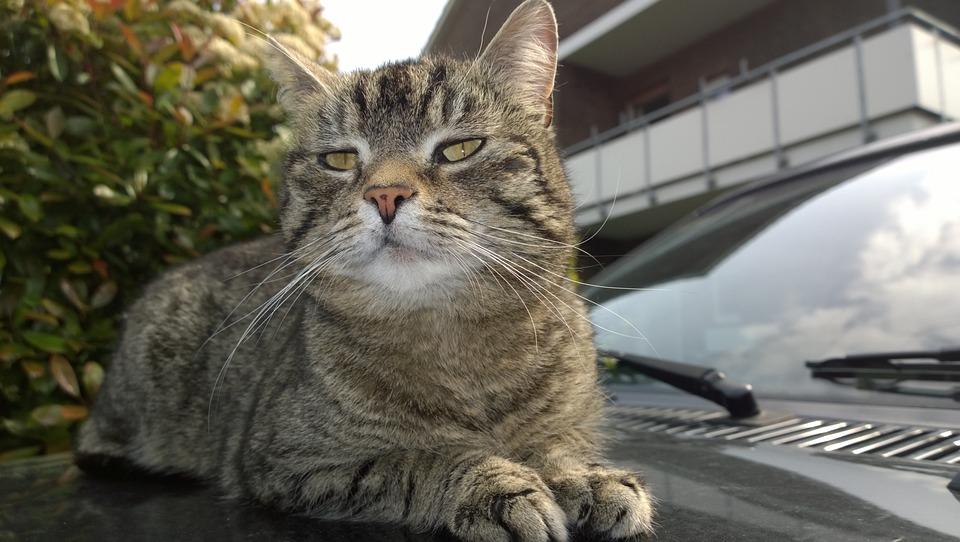 cat-1785145_960_720.jpg