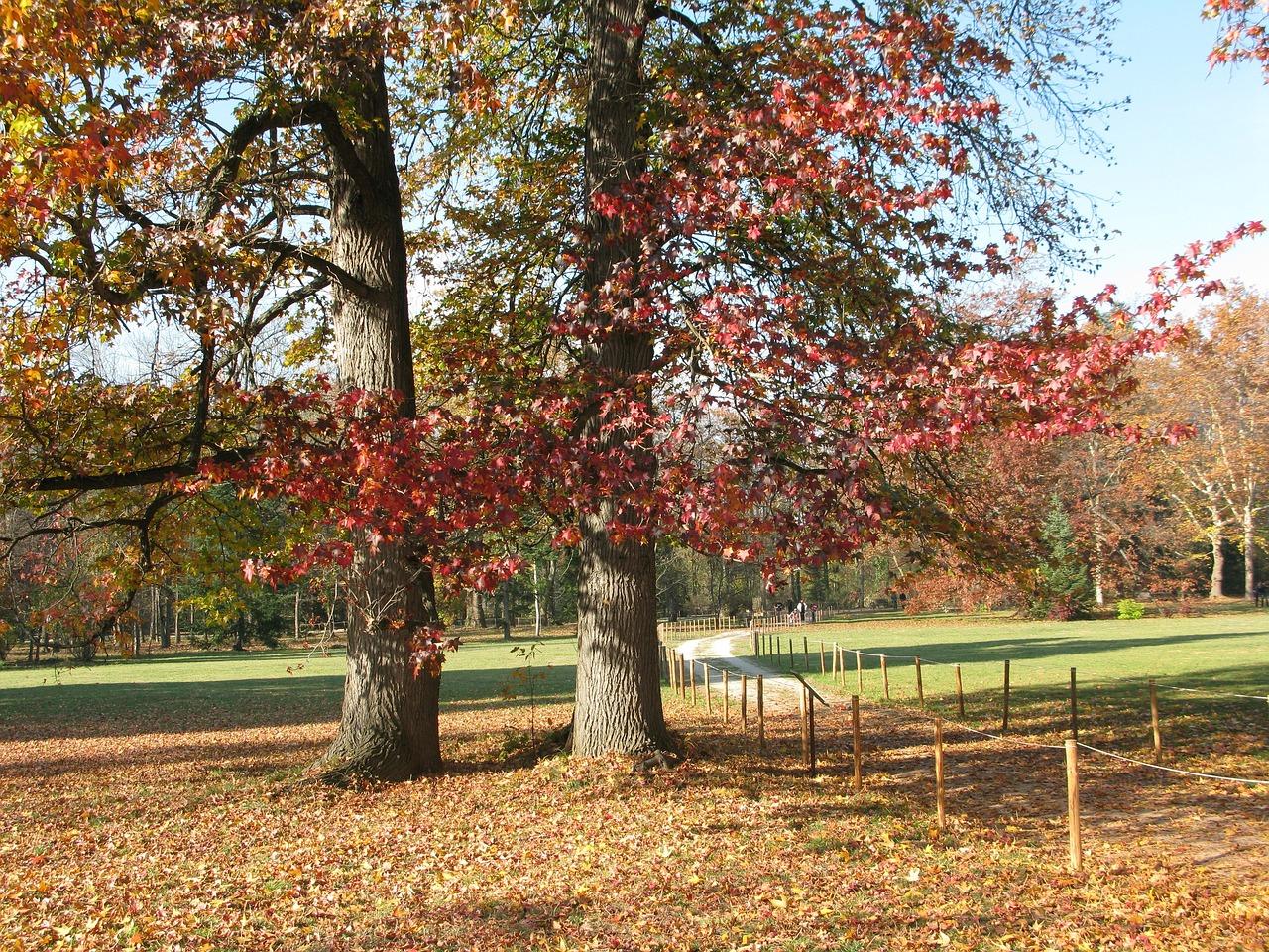 Картинки осенних деревьев в городе