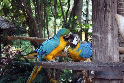 Loros Guacamayos, Aves, Loros, Guacamayo