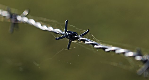 Barbed Wire, Fencing, Caution, Metal