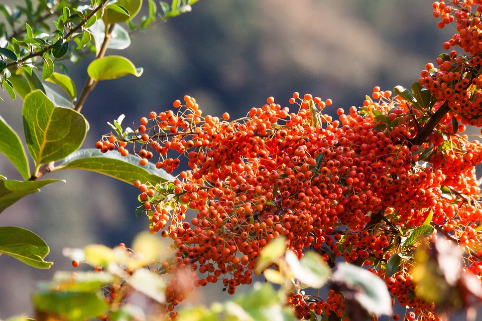 sea buckthorn berry fruit  u00b7 free photo on pixabay summer vector art summer vector files