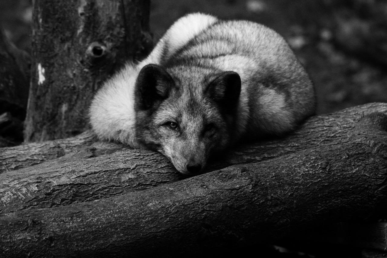 лучшие черно белые фото животных панама-сити, именно наши