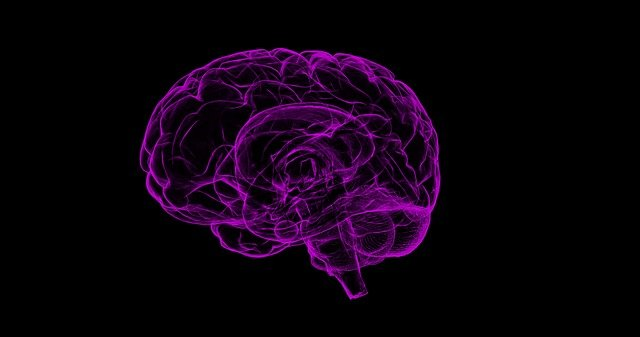Brain Human Anatomy 183 Free Image On Pixabay