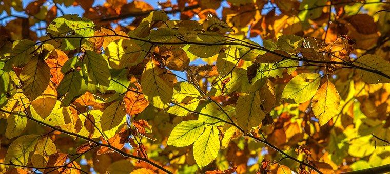 Laub, Herbst, Farbe, Farbenspiel, Licht