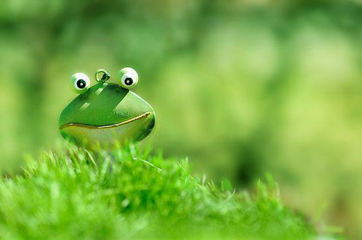 Frosch, Grün, Grüner Frosch, Gras