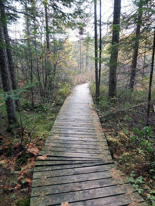 Kanada Wald Herbst Herbstliche Kostenloses Foto Auf Pixabay