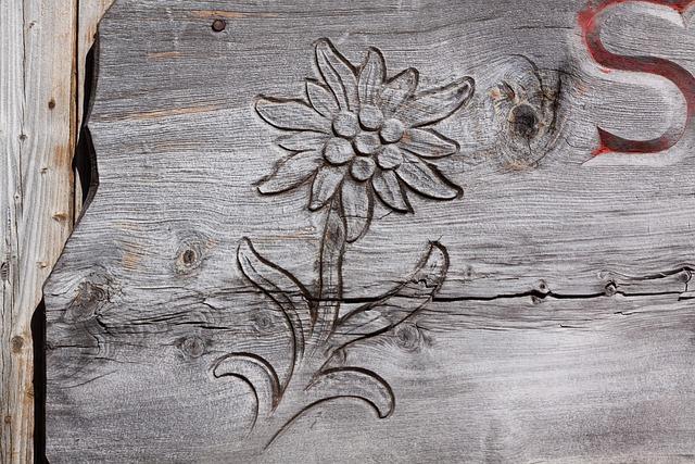 edelwei223 geschnitzt gravur 183 kostenloses foto auf pixabay