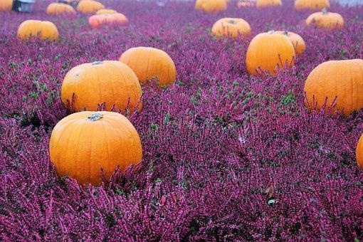 Herbstblumen bilder pixabay kostenlose bilder for Bilder herbstdeko