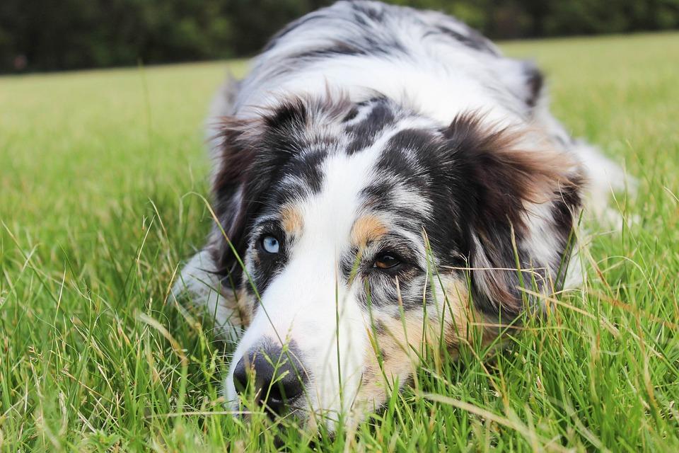 Eyes Sad Puppy Free Photo On Pixabay