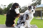 massage, dogs, friends