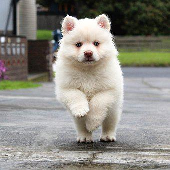 Puppy Running Dog Animal Pet Cute Young Na