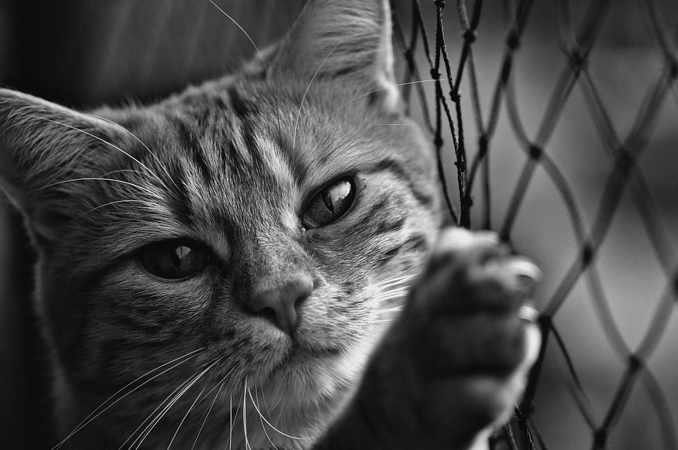 Cat Black And White Cute Free Photo On Pixabay