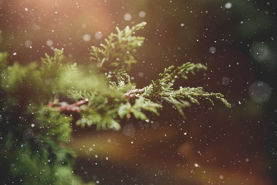 Winter, Plant, Branch, Tree, Green, Nature, Snowflakes