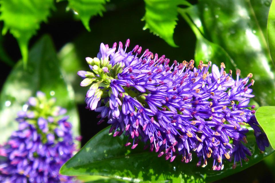 Plantes Fleur Tropiques Photo Gratuite Sur Pixabay