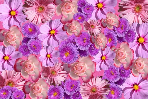 Small pink flowers images pixabay download free pictures flowers blossom bloom nature color purple mightylinksfo