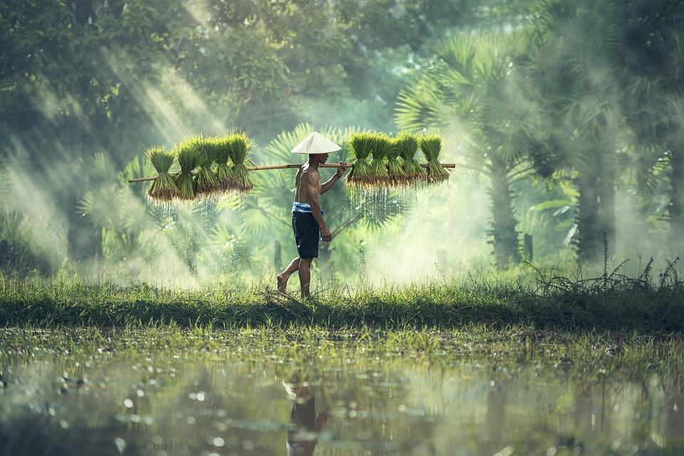 Agriculture Asia Cambodia
