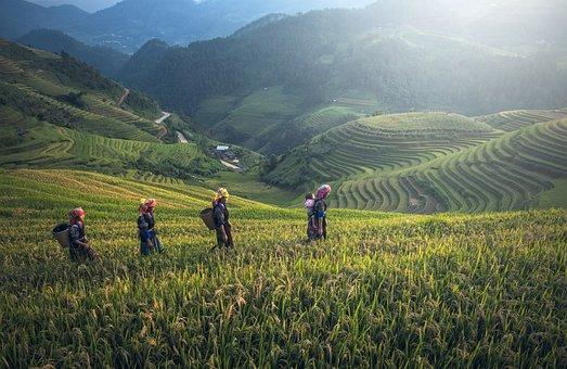 Agricultura, Asia, Bali, Camboya, China