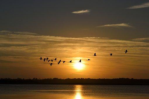 Pôr Do Sol, Florida, Pássaros, Aviária