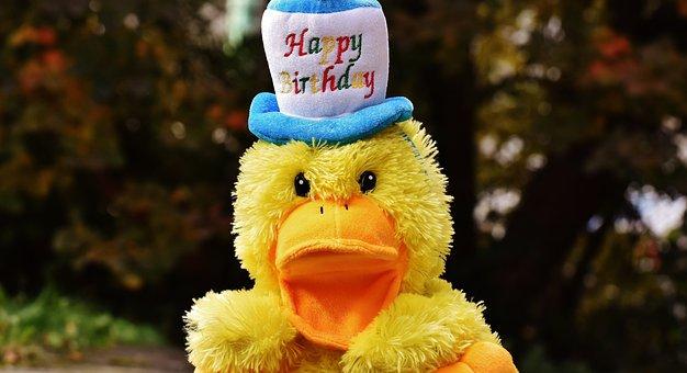 Birthday, Congratulations, Duck