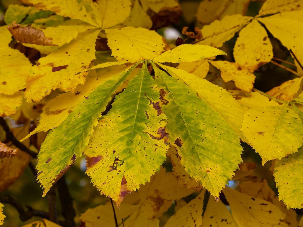фото осенних листьев деревьев с названиями защищен