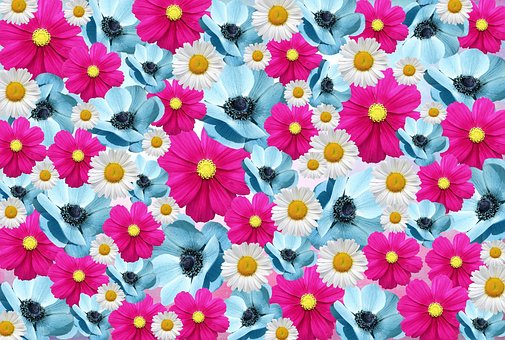 Pink daisy images pixabay download free pictures flowers nature pink light blue romantic da mightylinksfo Choice Image