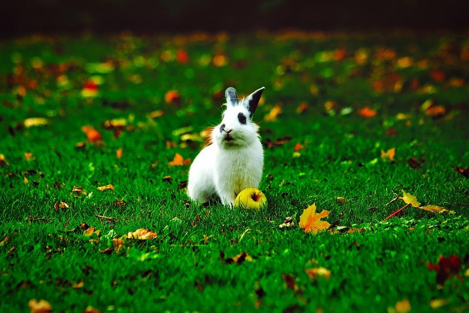 rabbit bunny animal 183 free photo on pixabay
