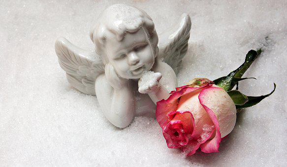 Angel, Angel Figure, Rose, Snow