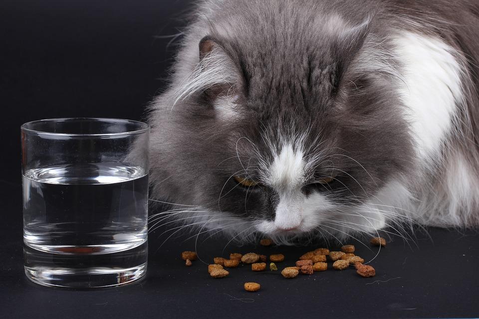 Kot pałaszujący niewielką ilość rozsypanej karmy. Obok niego szklanka z wodą.