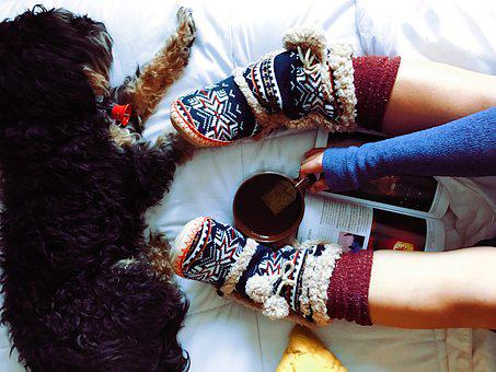 Dog, Pet, Furry, Animal, Tea, Drink, Cup
