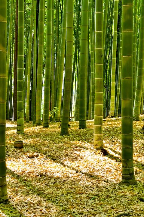 jepang hutan bambu foto gratis di pixabay jepang hutan bambu foto gratis di pixabay