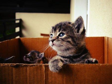 Kucing Bayi, Manis, Kesayangan, Melihat