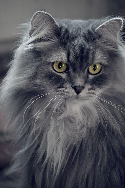 Cat Names For Fluffy Grey Cats