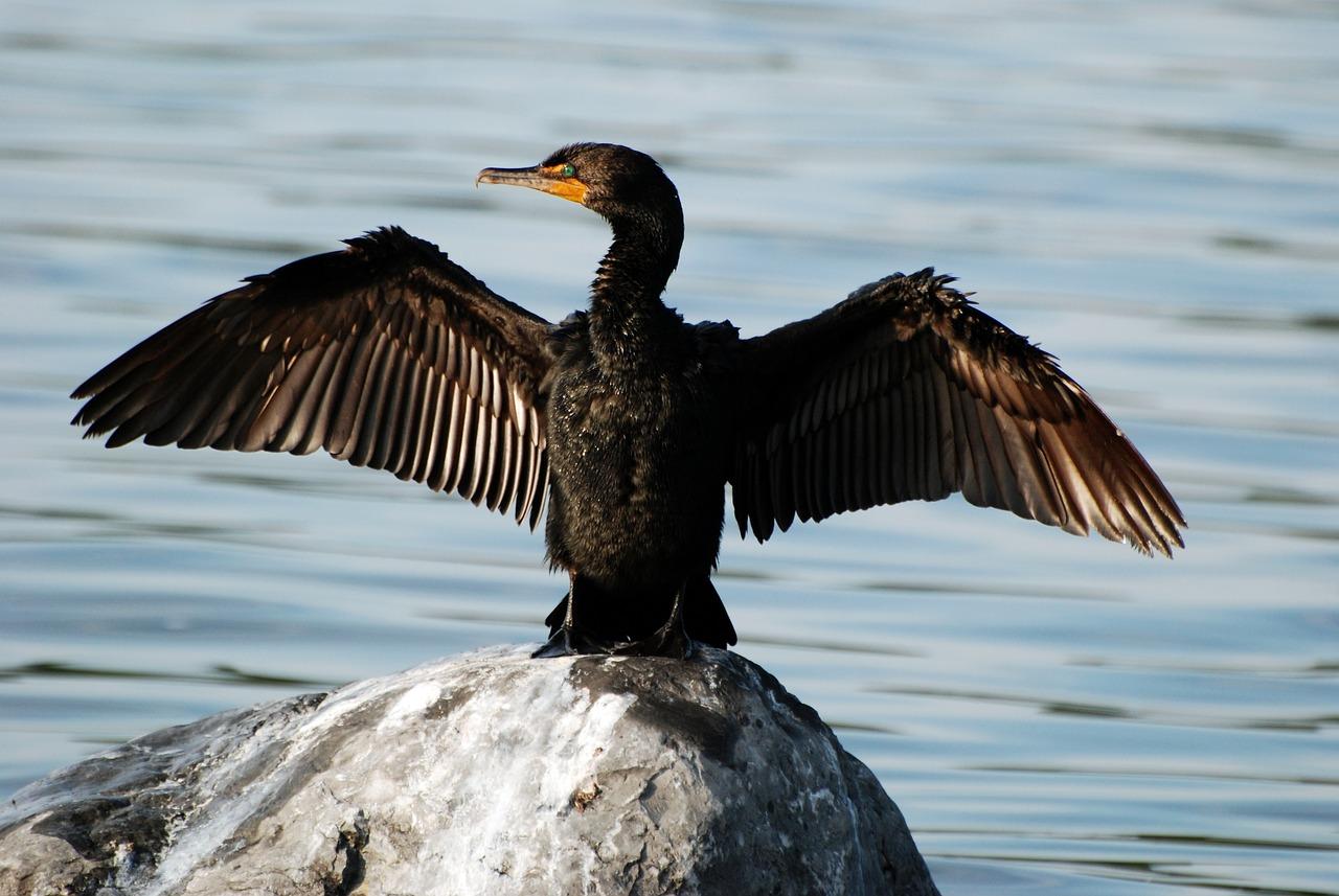 прихожей фото птиц бакланов интервью изданию